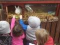 Kids feeding our own animals